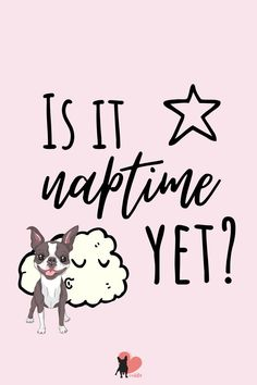 Is it naptime yet? How much should a Boston Terrier sleep? #bostonterrier #bostonterrierpuppy #bostonterrierfacts #bostonterriercare #bostonterrierhealth #bostonterrierbehaviour #bostonterriertemperament #owningabostonterrier #dogowner #dogmums #dogfacts #dogsleeping #bostonterrierpuppy #bostonterriersleep Dog Sleeping Positions, Sleeping Dogs, Sleeping Facts, Boston Terrier Temperament, Boston Bull Terrier, Every Dog Breed, National Sleep Foundation, Dog Facts