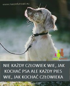 Proverbs, True Stories, Wise Words, Sad, Love You, Humor, Pets, Funny, Happy