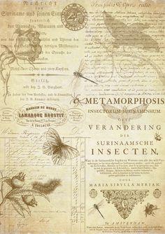 Metamorphosis by auRoraBor.deviantart.com on @deviantART