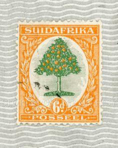 South Africa Orange Tree Vintage Postal Stamp Poster 16x20 Instant Download .JPG (042) via Etsy