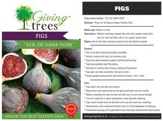 Giving Trees Available Fig Varieties