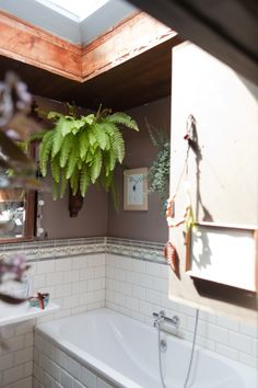 Hanging fern in bathroom