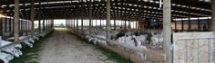 Goat dairy housing NZ dairy goat sheds, dairy goat barn designs