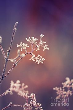 ✯ Frost