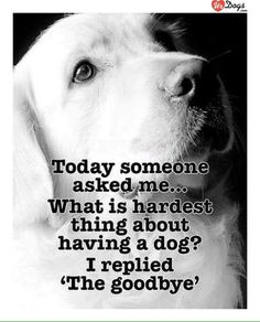 Funny Labrador Dog Quotes And Sayings – The Paws I Love Dogs, Puppy Love, Cute Dogs, Pet Sitter, Pet Loss Grief, Dog Poems, Pet Remembrance, Animal Quotes, Animal Pics