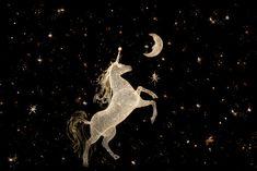 unicorn  (via Zsa Zsa Bellagio)