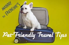 Pet-Friendly Travel Tips from Manny the Frenchie #GrouponGetaways