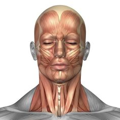 Anatomy of human face and neck muscles front view Canvas Art - Stocktrek Images (29 x 29)