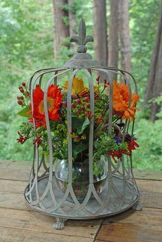 Terrarium Bird Cage to house simple arrangements