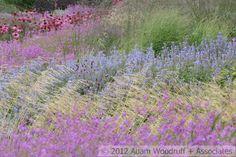 Oudolf ~ Lurie Garden, Millennium Park, Chicago _/////_
