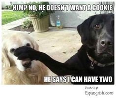 funny pets lol - Google Search