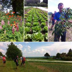 1. Thirova první jízda! Na cestě na Červenou Lhotu jsme se stavili na Farmě Vícemíl, Martin s Terezou můžete vidět každou středu na trzích v Táboře. Kupejte parádní lokální zeleninu pěstovánou bez chemie!  #thirwinebar #biofarm #biking #vicemil