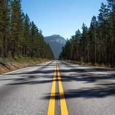 #Sometimes you just have to #jumpoutyourcar - #visitnorway #beautifulroad #mountains #travel #drive #endless #pinetrees
