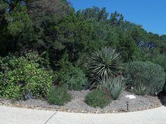 Rock-Oak-Deer: Garden Tour San Antonio Style: Xeric Garden