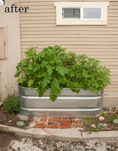 Before and After: Stock Tank Gardening Project | Apartment Therapy