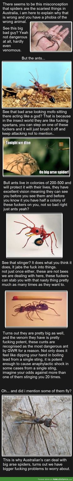 Deadliest insect in Australia