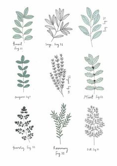 Explore the Plant Drawings 147968 Herb Print by Ryn Frank with these free drawing and coloring pages. Find here Plant Drawings 147968 Herb Print by Ryn Frank that you can print out. Botanical Drawings, Botanical Art, Botanical Line Drawing, Botanical Tattoo, Botanical Flowers, Flowers Garden, Natur Tattoos, Plant Tattoo, Herb Tattoo