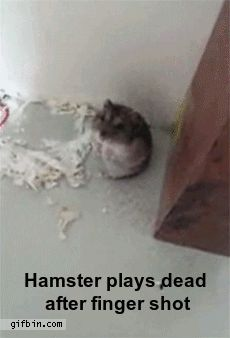 Hamster Plays Dead