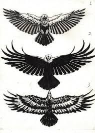 Image result for more! crow