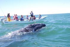 South Korean network MBC filming whale watching in Baja California Sur, Mexico.