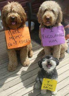 Signs #DogShaming