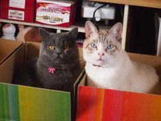 猫が選ぶお届け箱総選挙