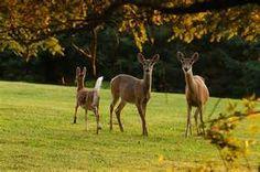 A Safe Meal For Your Neighborhood Deer