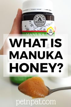 Manuka Honey: Where does it come from and how do you use it? Become an expert in all this Manuka honey with this guide ===> Animal Nutrition, Pet Nutrition, Animal Shelter, Shelter Dogs, Animal Rescue, What Is Manuka Honey, Farm Animals, Animals And Pets, Beekeeping Supplies