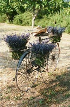 Lavender decorated antique bicycle | Style Lovely     ᘡղbᘠ