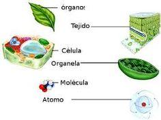 Resultado de imagen para niveles de organizacion internos de la planta