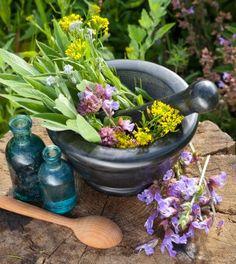 13 Top Medicinal Herbs To Grow In Your Survival Garden.  http://www.thegoodsurvivalist.com/15706-2/  #thegoodsurvivalist