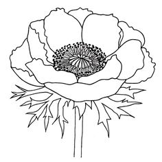 Poppies Digital Image Free From Birds Cards Find This