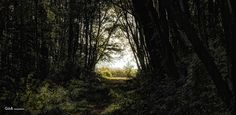 to the light - #GdeBfotografeert