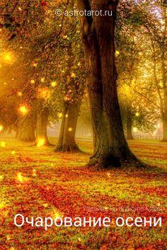 Гадание на оракуле Майя – Очарование осени. Этот расклад покажет, какой будет эта осень для вас, что неожиданного она принесет, в чем найдете утешение, что доставит вам радость, в чем найдете поддержку, что будет наполнять вас новыми надеждами, что станет для вас открытием, а также – какими будут ваши уроки, с чем вы войдете в зиму#гадания #оракул #оракулмайя #астротарот #astrotarot