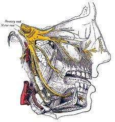 Trigeminal nerve  #TrigeminalNeuralgia #TrigeminalNeuralgiaAwareness