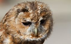 Daily Cute: Bath Time for Mr. Peabody the Owl @ http://www.care2.com/causes/daily-cute-bath-time-for-mr-peabody-the-owl.html
