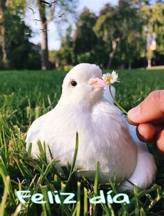 Pin De Mª Del Pilar Manrique Silván En Saludos En 2020 Pretty Animals, Cute Little Animals, Animals Beautiful, Beautiful Birds, Cute Creatures, Beautiful Creatures, Animals And Pets, Funny Animals, Animal Memes