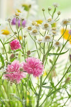 Wild flowers: if you pick them yourself, they're a bit more special than store flowers