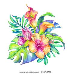 Hummingbird Discover Abstract Exotic Bunch Flowers Leaves Tropical Stock Illustration 276658670 watercolor floral illustration exotic nature tropical flowers bouquet orchid hibiscus cala lily green palm leaves isolated on white background Tropical Flowers, Tropical Flower Tattoos, Tropical Flower Arrangements, Exotic Flowers, Floral Flowers, Flowers Garden, Beautiful Flowers, Illustration Botanique, Illustration Blume