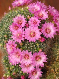 Succulent Gardening, Cacti And Succulents, Drought Resistant Plants, Cactus Planta, Agaves, Desert Plants, Small Trees, Air Plants, Trees To Plant
