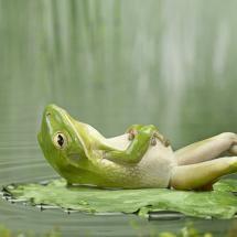 Frog taking it easy.