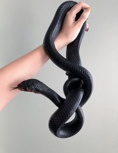 Pretty Snakes, Cool Snakes, Colorful Snakes, Beautiful Snakes, Les Reptiles, Cute Reptiles, Reptiles And Amphibians, Cute Baby Animals, Animals And Pets
