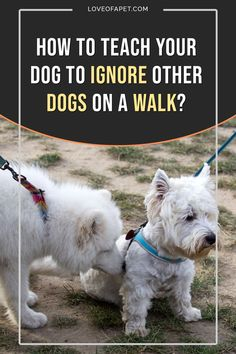 Training Your Puppy, Dog Training Tips, Potty Training, Dog Care Tips, Pet Tips, American Alsatian, Stop Dog Barking, R Dogs, Dog Walking