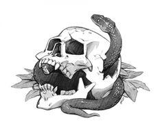 skull snake drawing rob laro