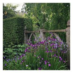 Feeling inspired by the beauty that is Wollerton Old Hall Garden in Shropshire. @wollertonohg