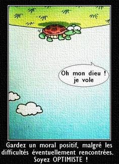 turtle thinks it's flying French Puns, French Sayings, Funny French, French Stuff, French Words, French Quotes, Core French, French Class, French Teaching Resources