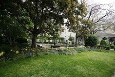 Square Georges Cain Dolores Park, Sidewalk, Travel, Viajes, Side Walkway, Walkway, Destinations, Traveling, Trips