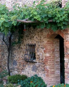 An entrance with grape vines Photo by: Ryannan Bryer de Hickman Imagine a stone walled garden. Stone Barns, Stone Houses, Brick Cottage, Pergola, Italian Garden, In Vino Veritas, Brick And Stone, The Great Outdoors, Grape Vines