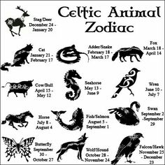Celtic Zoos Falcon/Hawk