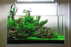 We can hardly believe that a fishkeeper with this kind of aquascaping talent has…